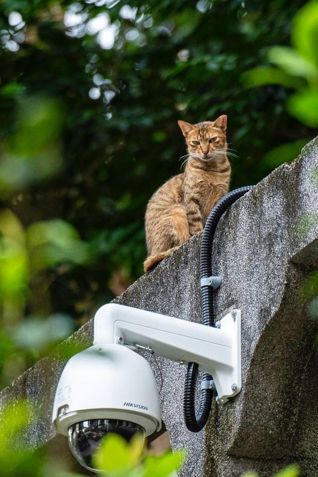 Vidéosurveillance à son domicile : quelle caméra de surveillance ?